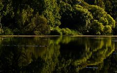 Oakland Lake...Queens NY