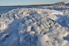 Ice on Little moose island 2
