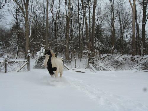 dewey running in the snow