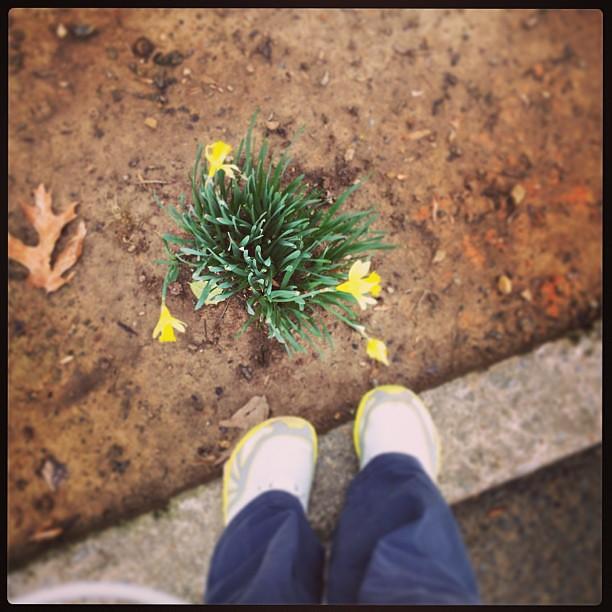 First flowers! #foundwhilerunning