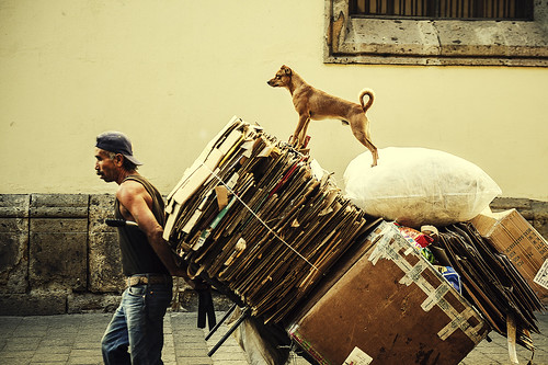 Perro y Cartonero, cardboard man and dog