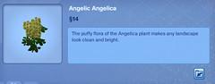 Angelic Angelica