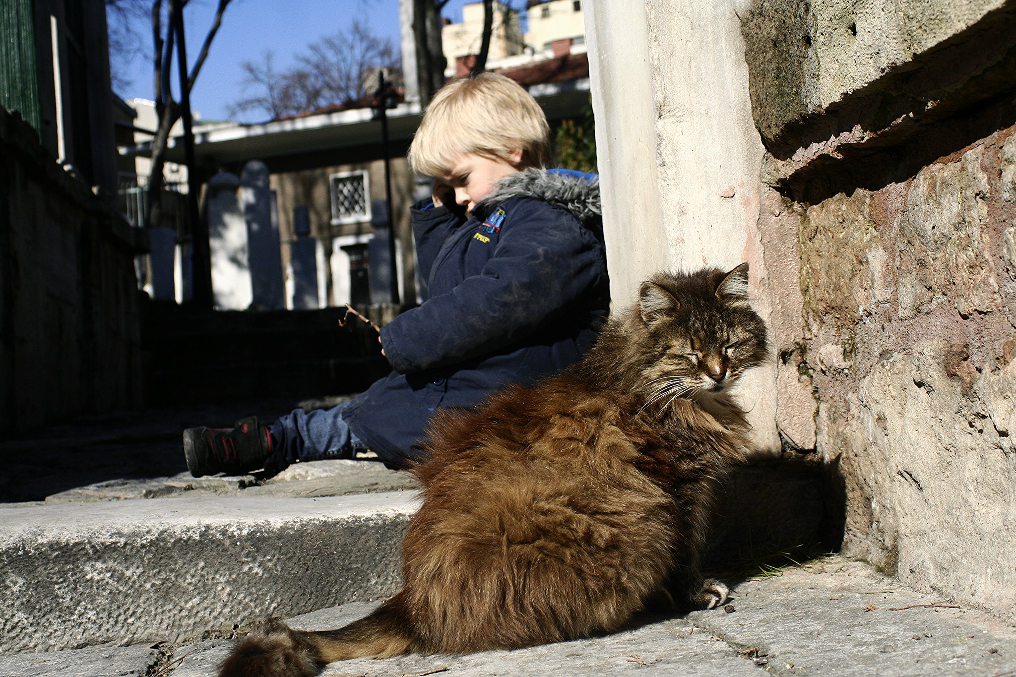 Contemplation and the cat.