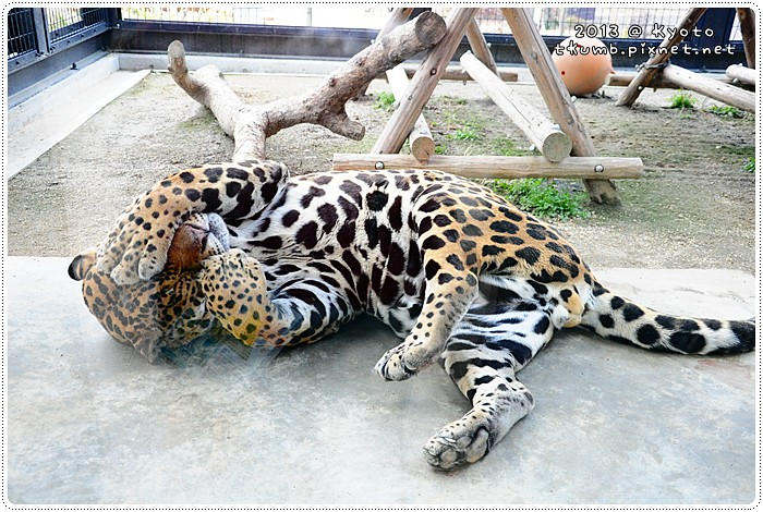 京都動物園 (4).jpg