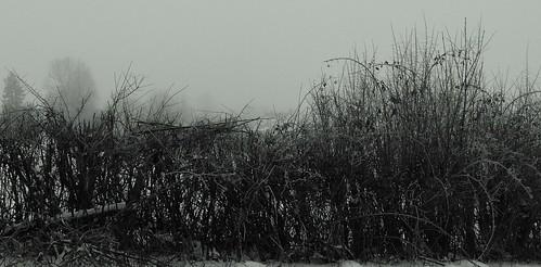 1155 Cold 2 by Nebojsa Mladjenovic