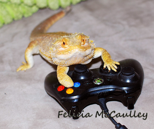 Bearded Dragon playing Xbox