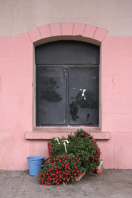 A window and flowers in Kadikoy, Istanbul, Turkey カドゥキョイ、とある建物の窓と花