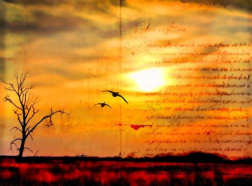 sunset sun texture silhouette photoshop canon spring canadiangeese migration barren ebbing texturedlayers canoneosdigitalrebelxsi jackaloha2 mygearandme photoshopcs5 galleryoffantasticshots bestevergoldenartists vigilantphotographersunite