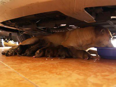 20130211_puppies