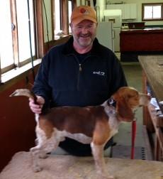 Logan Elm Red Rambler Owned by Jim McGuire by Logan Elm Beagles