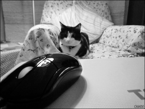 352/365 - Le chat et la souris by chando*