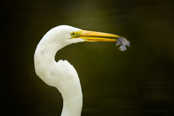 RYALE_Everglades-059