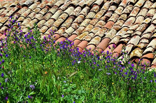 Spring Flowers & Roof Tiles, Teno, Tenerife