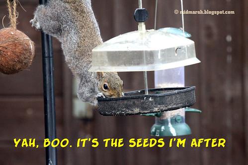 Squirrel Tale 5.jpg