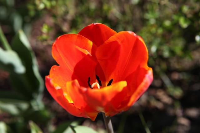 spring flower_063