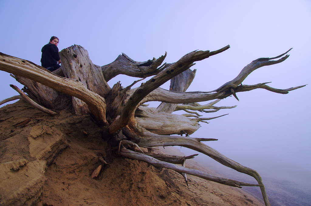 Arleen Winkelbauer, a recent graduate from SF State, sits on a dead tree at Ocean Beach. Photo by Sam Dosick / Special to Xpress