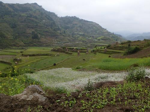 Guizhou13-Kaili-Shiqiao (101)
