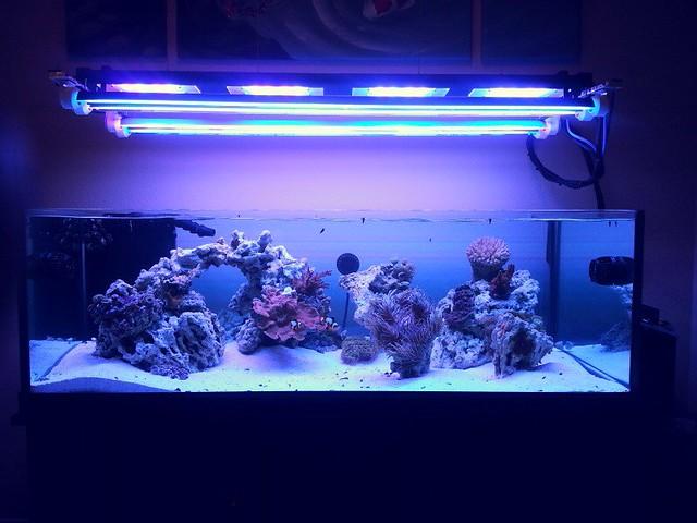 my t5 led hybrid light lighting forum nano forums. Black Bedroom Furniture Sets. Home Design Ideas