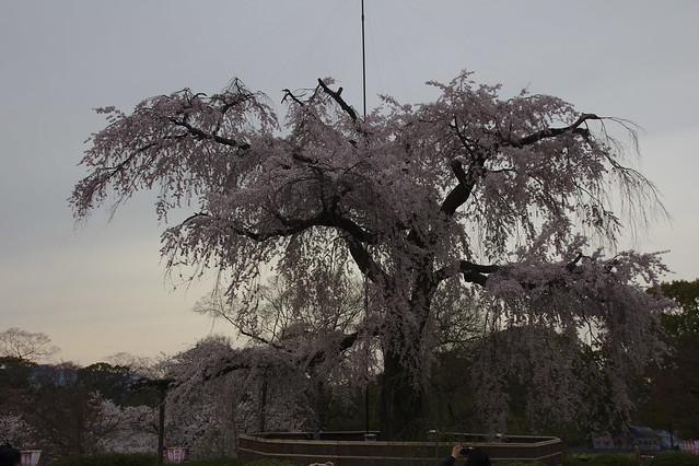 0724 - Maruyama Park
