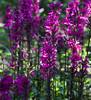 Botanic Gardnes-041