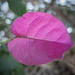 09.15.16 - PINK LEAF WITH BOKEH