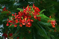 未列名花卉樹木及蔬果 '16aa
