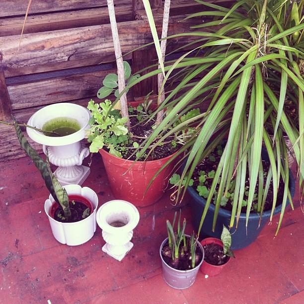 Plantas ao sol