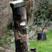 LongTailed Tits on my Feeder by kestrel49