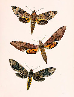 The most-viewed image in the BHL Flickr? Sammlung neuer oder wenig bekannter aussereurop�ischer Schmetterlinge (1850-58), bd. 1, pl. [45], with 2,145 views.