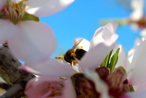 De abeja a abeja by Paxtorino