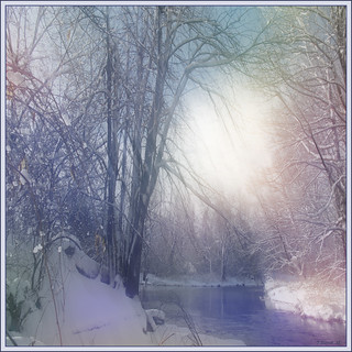 Luminous Winter Forest Sky