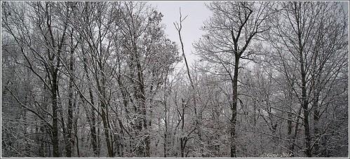 trees snow tree canon 365 sigma1770mmf2845dcmacro canont1i