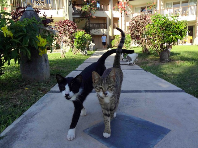 Family of cats at Lux Grand Gaube Resort
