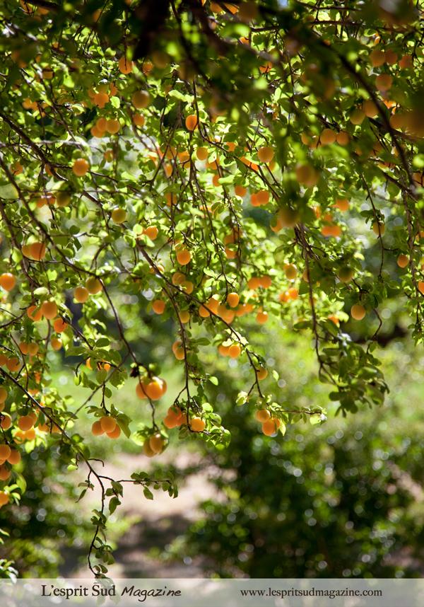 Organic chef garden - La Bonne Etape