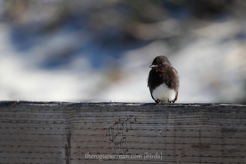 012513_03_bird02