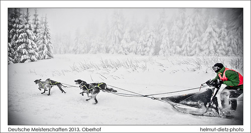 Deutsche Meisterschaften DM 2013 Schlittenhunderennen, Oberhof, Thüringen - helmut-dietz-photo