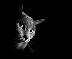 [フリー画像素材] 動物 (哺乳類), 猫・ネコ, モノクロ ID:201302271000