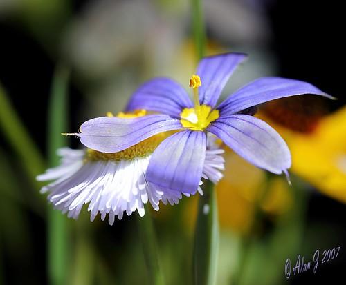 flower canon wildflowers 5dmarkiii mygearandme 100mmmacrof28lisusm photographyforrecreation floridaspain