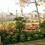 LANLT Fremont herb garden