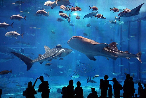 Planning to set up an oceanarium at the Shamuka project site