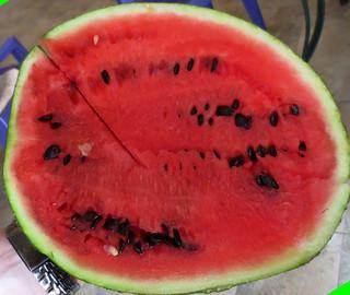 EgyptWatermelon-3