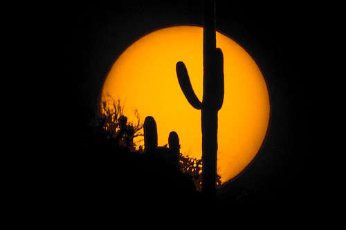 sunset arizona cactus sun tucson saguaro solarfilter arizonasonoradesertmuseum nd5 thousandoaksoptical