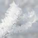 hoar-frost-detail-6