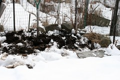 sowing in snow 007