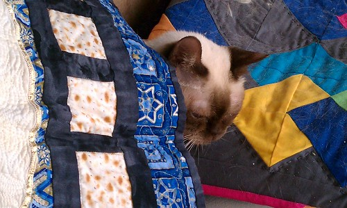 "Yep, that's my cat. She ""never"" goes under a quilt... She's a topper. by aviva_hadas (Amy)"