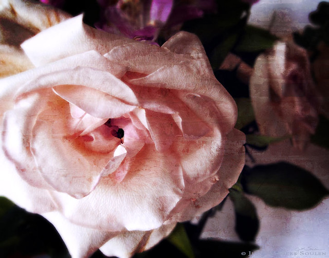 A shabby chic pink rose with a tiny heart center, fading yet still elegant with a vintage texture applied giving it an antique look.
