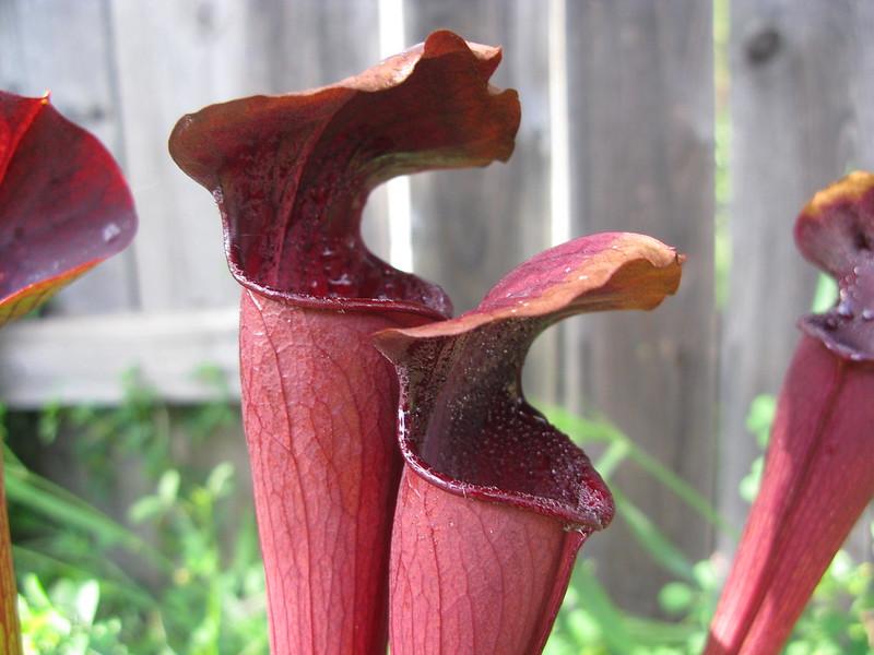 Davis Plants 1180