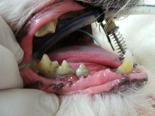 Lilly dental