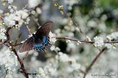 Butterfly & bokeh