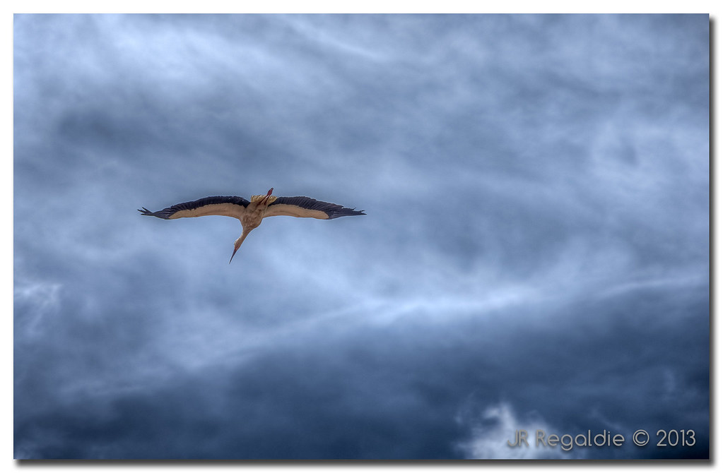 En vuelo I by JR Regaldie Photo